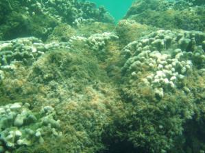 invasive species.png